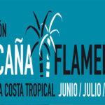 Caña Flamenca 2019